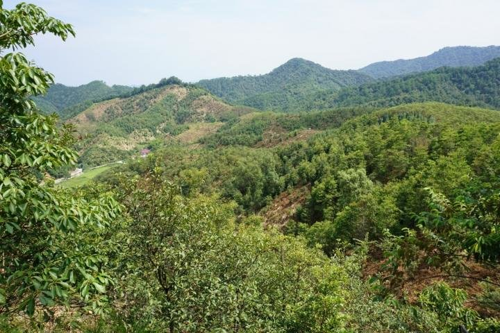 Как сосуществуют деревья: понимание биоразнообразия