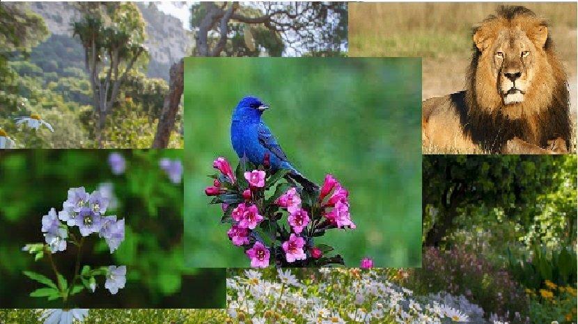 В ООН оценили темпы сокращения биоразнообразия в мире